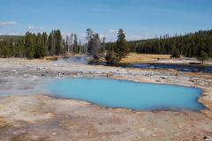 Tours of Yellowstone