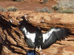 Horseshoe Bend tours
