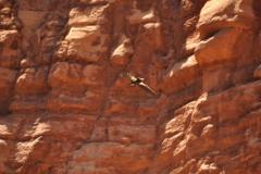 Grand Canyon white water rafting condor