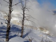Winter tours to Yellowstone