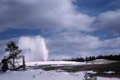 A geyser erupts in the Upper Geyser Basin in the winter.