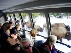 Yellowstone winter snowcoach tour