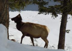 Snowcoach tours in Yellowstone in the winter