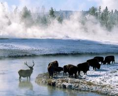 Yellowstone winter tour